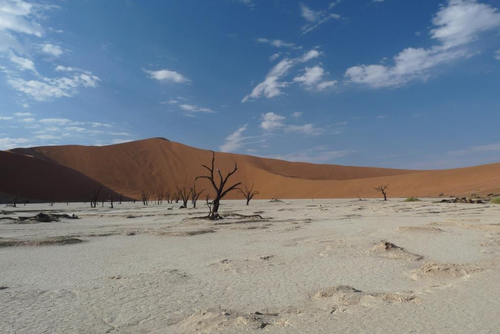 zambiadeserttree