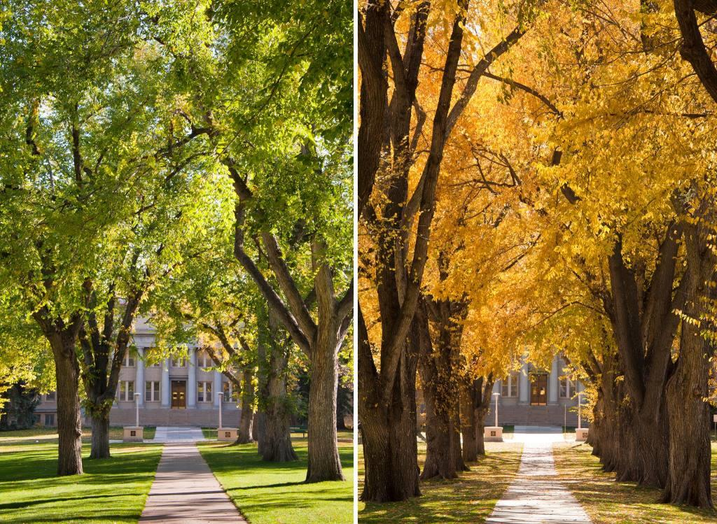 Goodbye Summer, Hello Fall, image from Colorado State University.