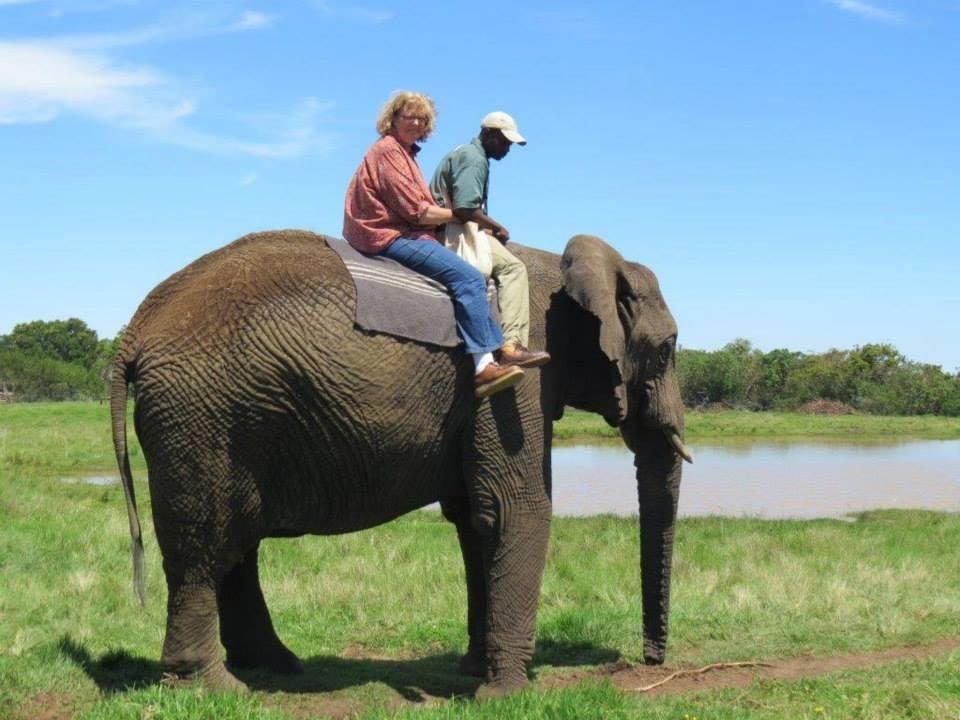 sarahonanelephant