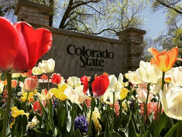 Colorado State University sign with tulips