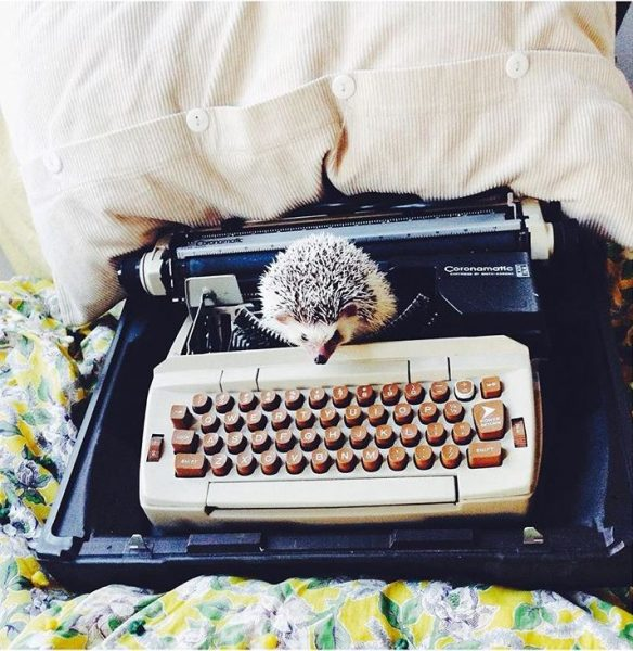 A hedgehog sitting on a typewriter.